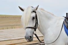 Kopf des Pferds Stockbilder