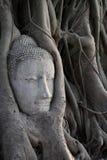 Kopf des Sandsteins Buddha in den Baum-Wurzeln Stockbilder