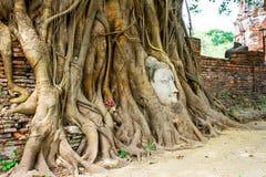 Kopf des Sandsteins Buddha in den Baum-Wurzeln Stockfotografie