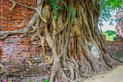 Kopf des Sandsteins Buddha in den Baum-Wurzeln Lizenzfreie Stockfotografie