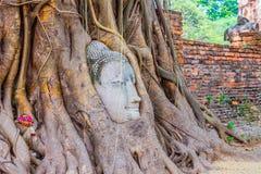 Kopf des Sandsteins Buddha in den Baum-Wurzeln Stockfotos