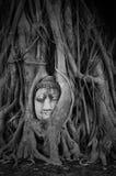 Kopf des Sandsteins Buddha in den Baum-Wurzeln bei Wat Mahathat stockfotografie