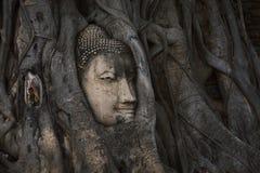 Kopf des Sandsteins Buddha in den Baum-Wurzeln bei Wat Mahathat, Ayut Stockfotografie
