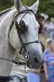 Kopf des weißen Pferds Stockfotos