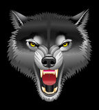 Kopf des Wolfs Lizenzfreie Stockfotografie