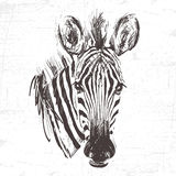 Kopf des Zebras in der Technik des Stiches Stockfoto