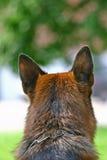 Kopf einer Hundehinteren Ansicht Stockfotografie