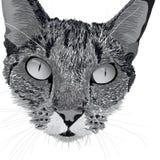 Kopf einer Katze Stockbilder