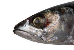Kopf einer Makrele Stockbild