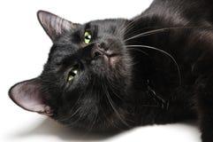 Kopf einer schwarzen Katze, die auf weißem Hintergrund liegt Lizenzfreie Stockbilder