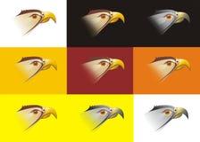 Kopf eines Falken auf einem Farbenhintergrund Lizenzfreie Stockbilder