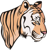 Kopf eines kleinen Tigerjungen Stockbilder