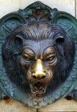 Kopf eines Löwekopfes Stockfoto