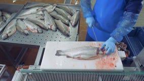 Kopf eines rohen Lachses erhält durch einen Arbeiter gehackt stock video footage