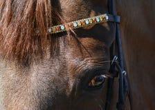 Kopf eines roten Pferds mit einem schönen Zaum Stockfotografie