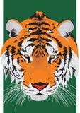 Kopf eines Tigers Lizenzfreie Stockbilder