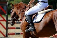 Kopf-Schuss eines Showpulloverpferds während des Trainings mit unidentifi Lizenzfreies Stockfoto
