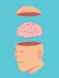 Kopf und Gehirn des Menschen Lizenzfreie Stockfotos