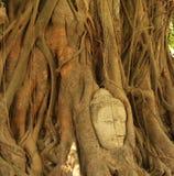 Kopf von Buddha lizenzfreie stockfotografie