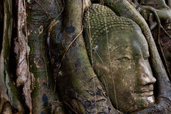 Kopf von Buddha bei Ayutthaya, Thailand Lizenzfreie Stockfotos
