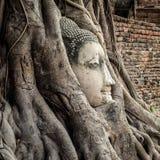 Kopf von Buddha-Statue in den Baum-Wurzeln, Ayutthaya, Thailand Lizenzfreies Stockbild
