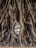 Kopf von Buddha-Statue in den Baum-Wurzeln, Ayutthaya, Thailand Lizenzfreie Stockfotografie
