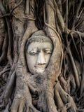 Kopf von Buddha-Statue in den Baum-Wurzeln, Ayutthaya, Thailand Lizenzfreie Stockfotos