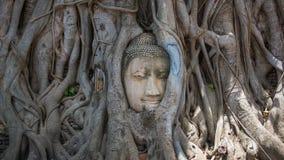 Kopf von Buddha-Statue im Baum wurzelt an Wat Mahathat-Tempel, Ayutthaya, Thailand stockbild