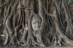 Kopf von Buddha-Statue im Pho-Baum wurzelt an Wat Mahathat-Temp Lizenzfreie Stockfotografie