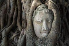 Kopf von Buddha-Statue im Pho-Baum wurzelt an Wat Mahathat-Temp Lizenzfreie Stockbilder