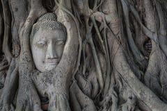 Kopf von Buddha-Statue im Pho-Baum wurzelt an Wat Mahathat-Temp Lizenzfreies Stockfoto