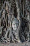 Kopf von Buddha-Statue im Pho-Baum wurzelt an Wat Mahathat-Temp Stockfotografie