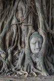 Kopf von Buddha-Statue im Pho-Baum wurzelt an Wat Mahathat-Temp Stockfotos