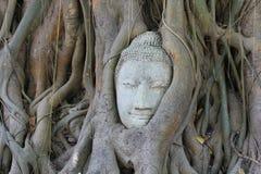 Kopf von Buddha unter einem Feigebaum in Ayutthaya Lizenzfreie Stockbilder