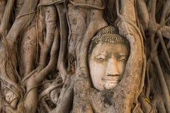 Kopf von den Sandsteinbuddha-Baumwurzeln umfasst bei Wat Mahathat, Ayu Lizenzfreies Stockfoto