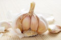 Kopf von garlics lizenzfreie stockbilder