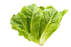 Kopfsalat. Lizenzfreies Stockfoto