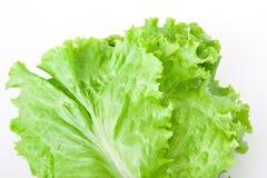 Kopfsalat Stockfotografie