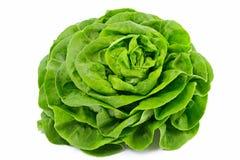 Kopfsalat Stockfoto