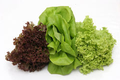 Kopfsalat Stockfotos