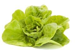 Kopfsalat auf einem weißen Hintergrund Stockbild
