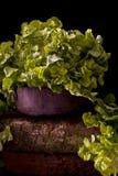 Kopfsalat auf einer Schüssel lizenzfreies stockfoto