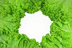Kopfsalat auf weißem Hintergrund Stockbilder
