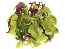 Kopfsalat-Blätter Lizenzfreies Stockbild