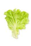 Kopfsalat-Blatt Stockfoto