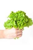 Kopfsalat in der Hand Lizenzfreie Stockfotos
