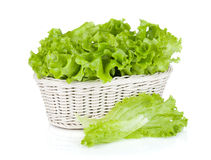 Kopfsalat im Korb lizenzfreies stockbild