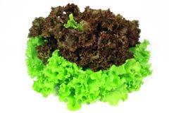 Kopfsalat ist Blätter Stockfotografie