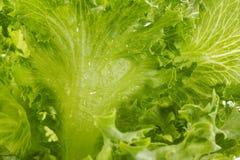 Kopfsalat nahes up1 Stockfotos