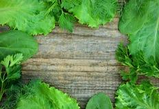 Kopfsalat, Petersilie, Dill und Spinat Stockbild
